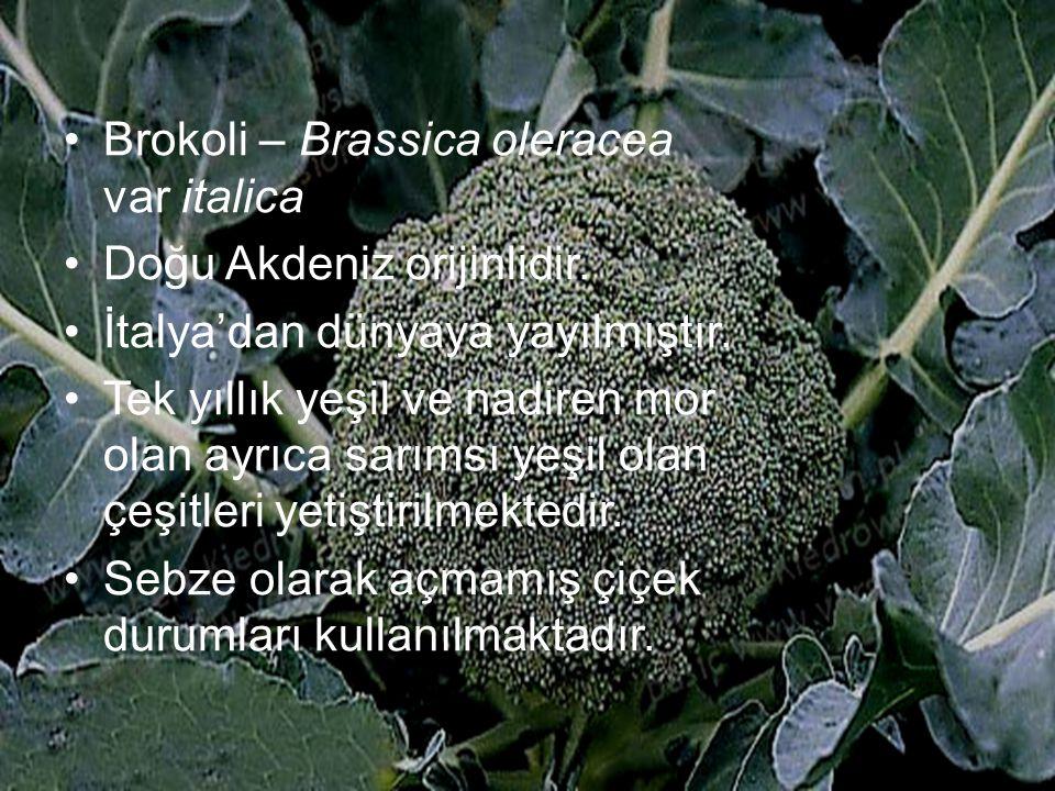 Brokoli – Brassica oleracea var italica Doğu Akdeniz orijinlidir. İtalya'dan dünyaya yayılmıştır. Tek yıllık yeşil ve nadiren mor olan ayrıca sarımsı
