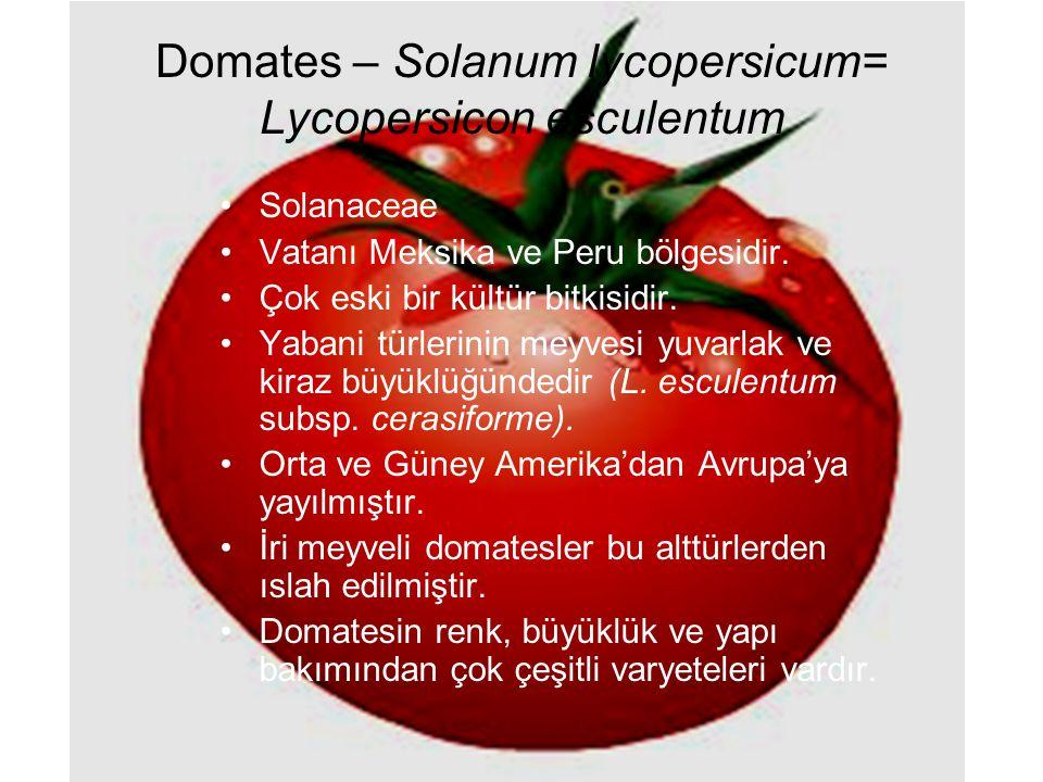 Domates – Solanum lycopersicum= Lycopersicon esculentum Solanaceae Vatanı Meksika ve Peru bölgesidir. Çok eski bir kültür bitkisidir. Yabani türlerini