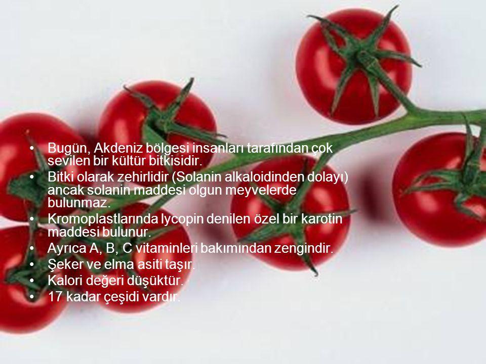 Bugün, Akdeniz bölgesi insanları tarafından çok sevilen bir kültür bitkisidir. Bitki olarak zehirlidir (Solanin alkaloidinden dolayı) ancak solanin ma