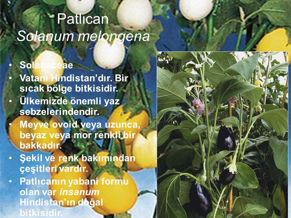 Patlıcan Solanum melongena Solanaceae Vatanı Hindistan'dır. Bir sıcak bölge bitkisidir. Ülkemizde önemli yaz sebzelerindendir. Meyve ovoid veya uzunca