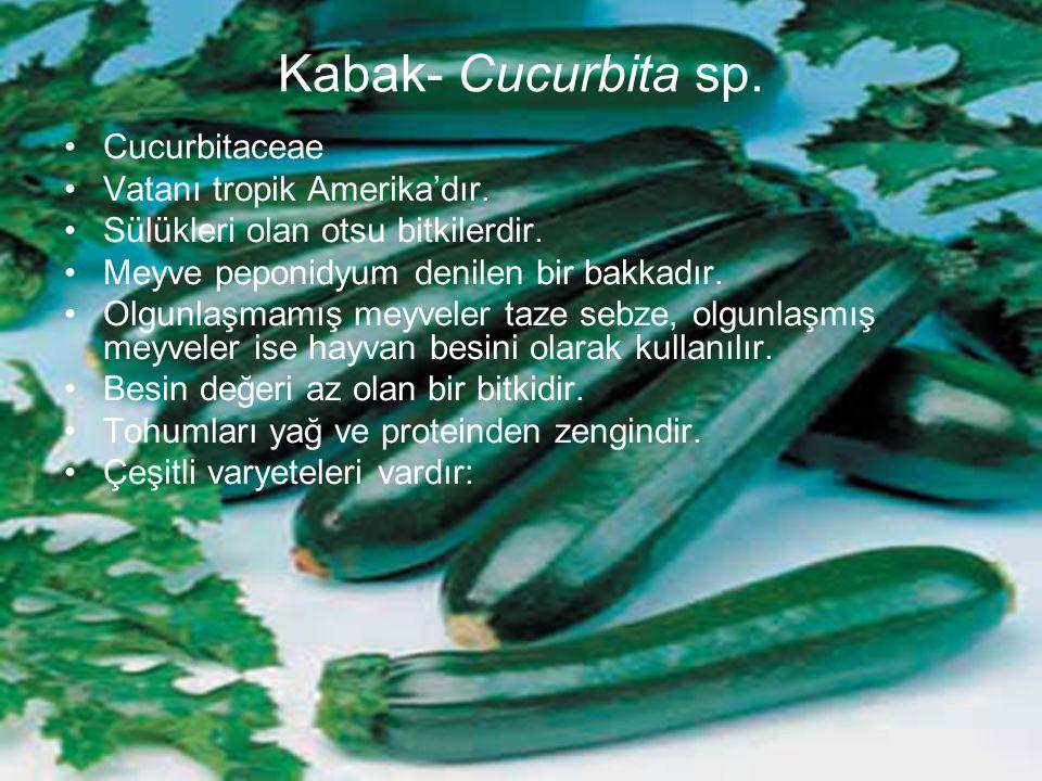 Kabak- Cucurbita sp. Cucurbitaceae Vatanı tropik Amerika'dır. Sülükleri olan otsu bitkilerdir. Meyve peponidyum denilen bir bakkadır. Olgunlaşmamış me