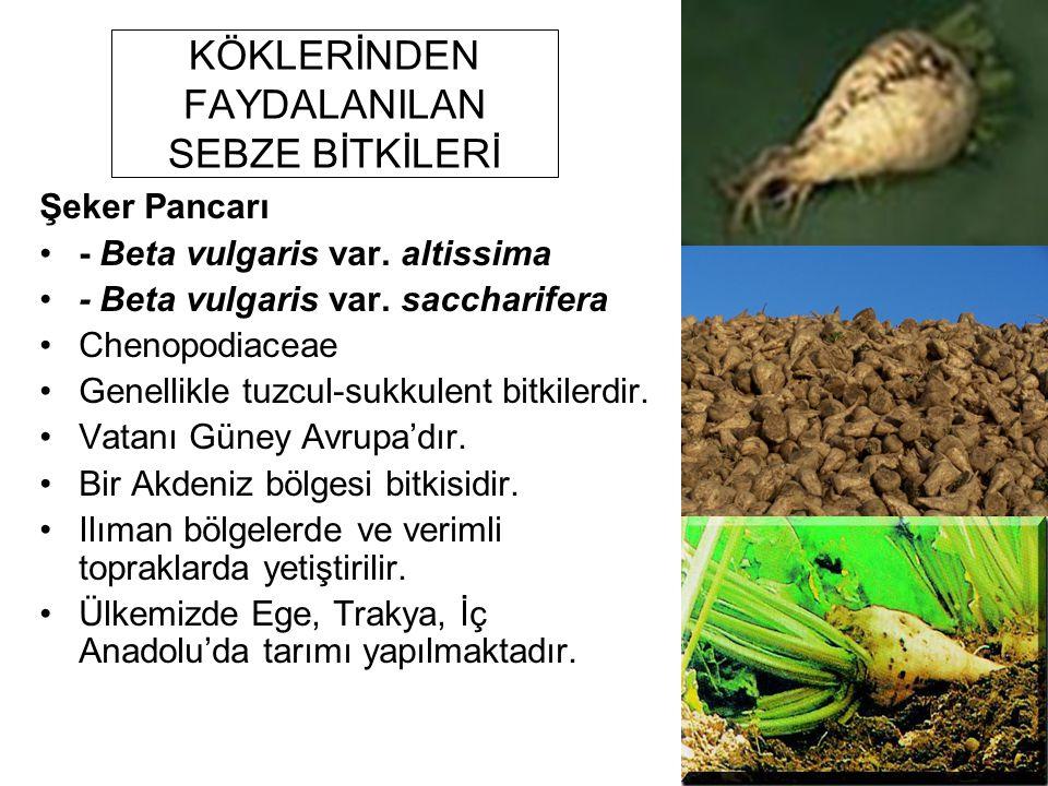 KÖKLERİNDEN FAYDALANILAN SEBZE BİTKİLERİ Şeker Pancarı - Beta vulgaris var. altissima - Beta vulgaris var. saccharifera Chenopodiaceae Genellikle tuzc