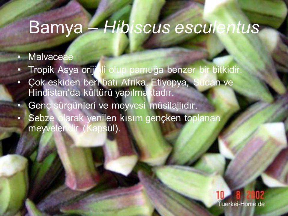 Bamya – Hibiscus esculentus Malvaceae Tropik Asya orijinli olup pamuğa benzer bir bitkidir. Çok eskiden beri batı Afrika, Etiyopya, Sudan ve Hindistan