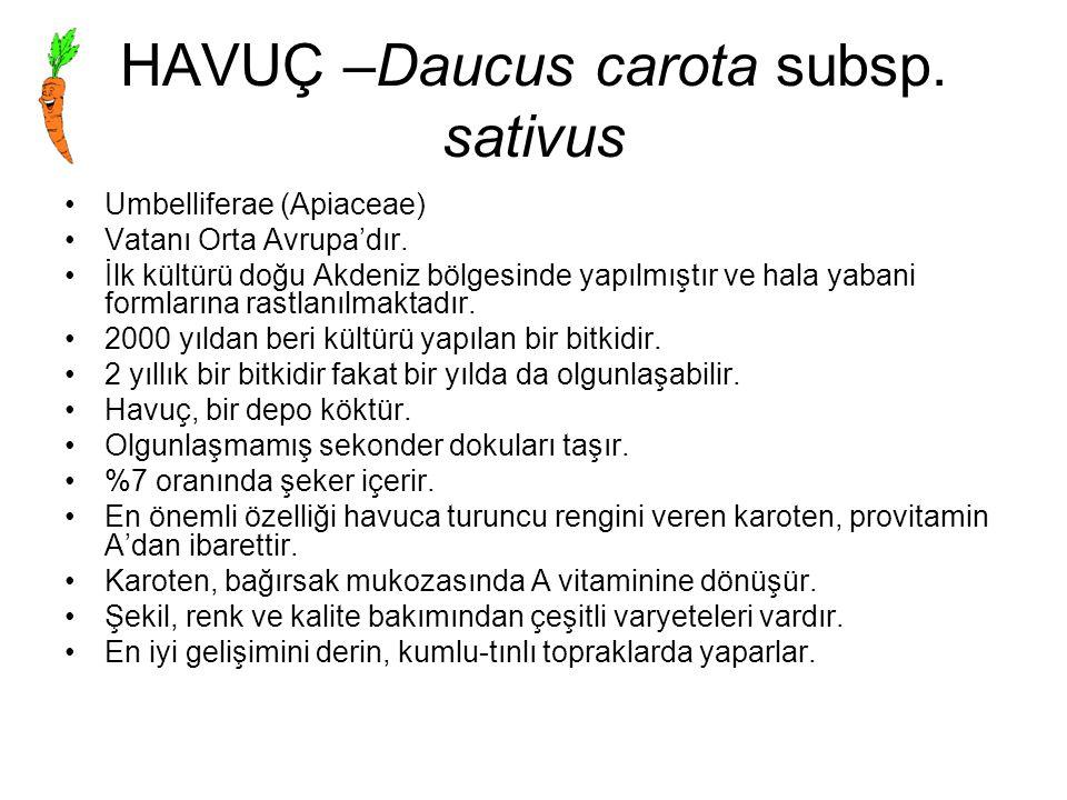 HAVUÇ –Daucus carota subsp. sativus Umbelliferae (Apiaceae) Vatanı Orta Avrupa'dır. İlk kültürü doğu Akdeniz bölgesinde yapılmıştır ve hala yabani for