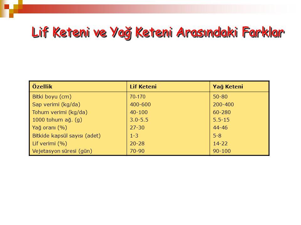 Lif Keteni ve Yağ Keteni Arasındaki Farklar ÖzellikLif KeteniYağ Keteni Bitki boyu (cm) Sap verimi (kg/da) Tohum verimi (kg/da) 1000 tohum ağ. (g) Yağ