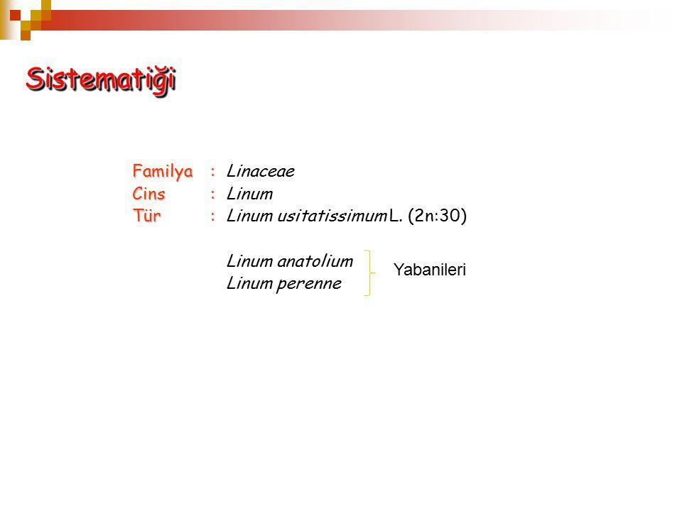 SistematiğiSistematiği Familya: Familya: Linaceae Cins: Cins: Linum Tür: Tür: Linum usitatissimum L. (2n:30) Linum anatolium Linum perenne Yabanileri