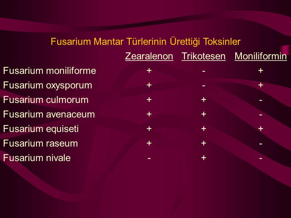 Fusarium Mantar Türlerinin Ürettiği Toksinler ZearalenonTrikotesenMoniliformin Fusarium moniliforme+-+ Fusarium oxysporum+-+ Fusarium culmorum++- Fusa