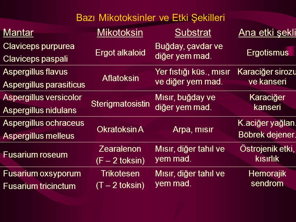 Bazı Mikotoksinler ve Etki Şekilleri MantarMikotoksinSubstratAna etki şekli Claviceps purpurea Ergot alkaloid Buğday, çavdar ve diğer yem mad. Ergotis