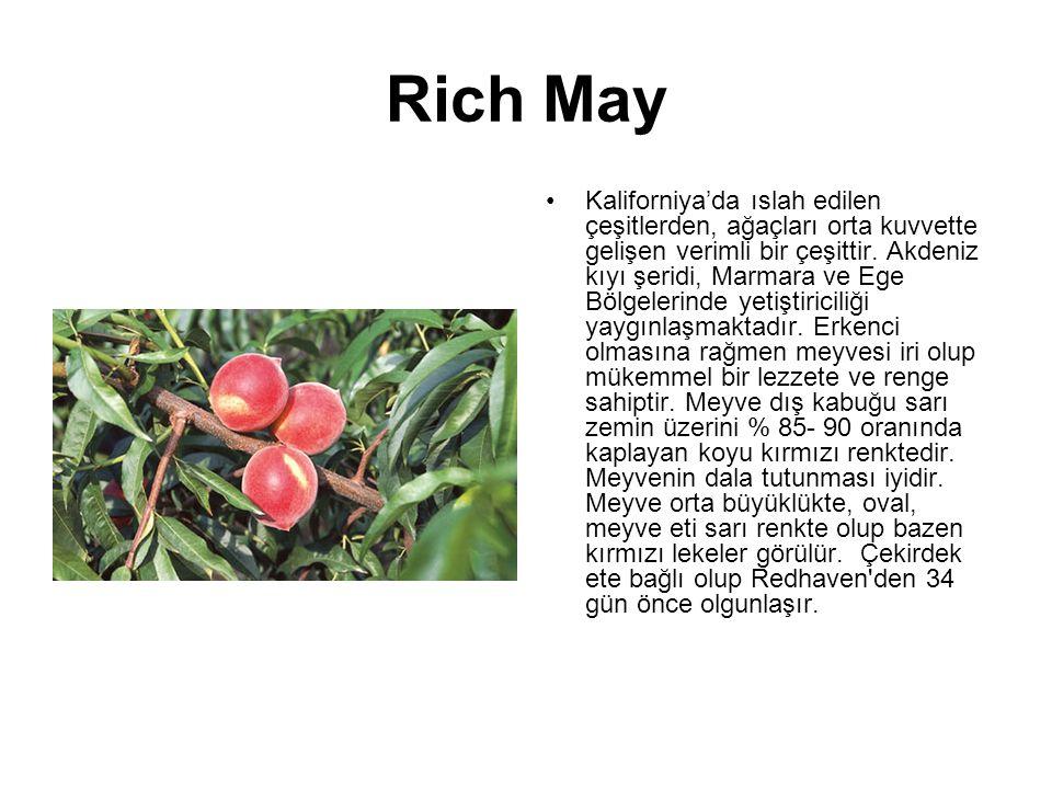 Rich May Kaliforniya'da ıslah edilen çeşitlerden, ağaçları orta kuvvette gelişen verimli bir çeşittir. Akdeniz kıyı şeridi, Marmara ve Ege Bölgelerind