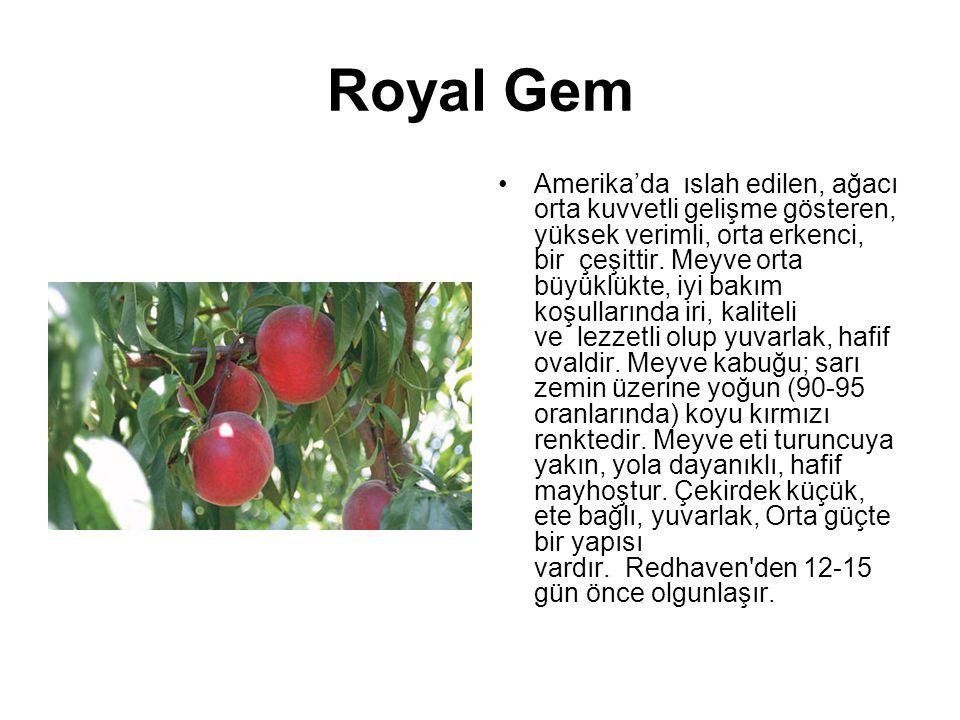 Royal Gem Amerika'da ıslah edilen, ağacı orta kuvvetli gelişme gösteren, yüksek verimli, orta erkenci, bir çeşittir. Meyve orta büyüklükte, iyi bakım