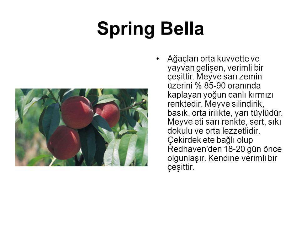 Spring Bella Ağaçları orta kuvvette ve yayvan gelişen, verimli bir çeşittir. Meyve sarı zemin üzerini % 85-90 oranında kaplayan yoğun canlı kırmızı re