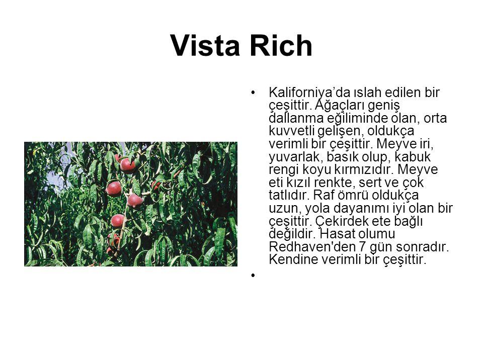 Vista Rich Kaliforniya'da ıslah edilen bir çeşittir. Ağaçları geniş dallanma eğiliminde olan, orta kuvvetli gelişen, oldukça verimli bir çeşittir. Mey