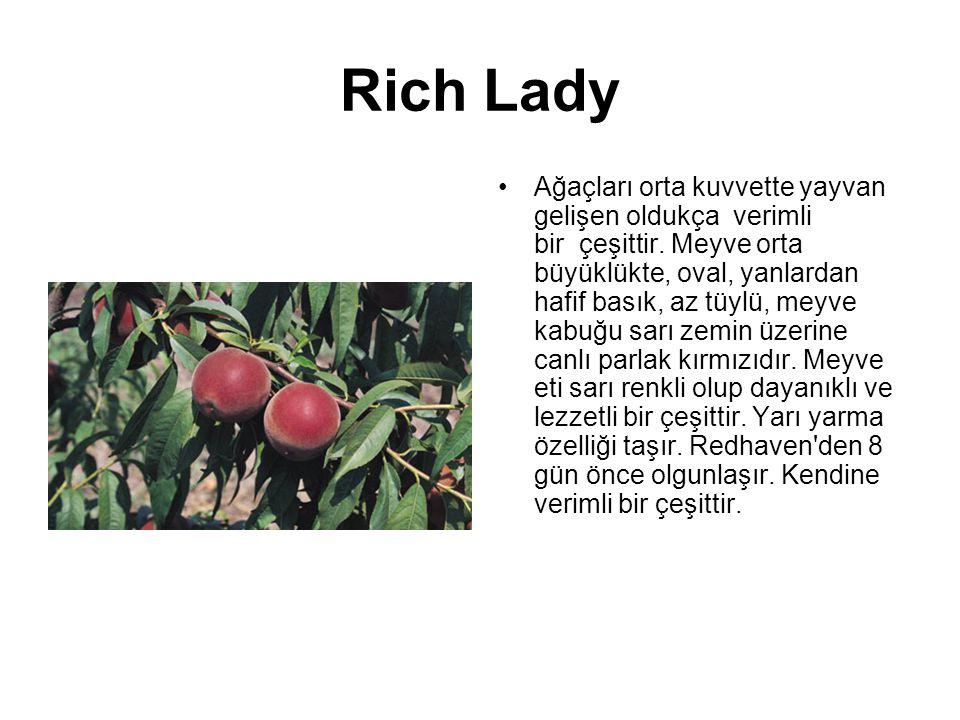 Rich Lady Ağaçları orta kuvvette yayvan gelişen oldukça verimli bir çeşittir. Meyve orta büyüklükte, oval, yanlardan hafif basık, az tüylü, meyve kabu