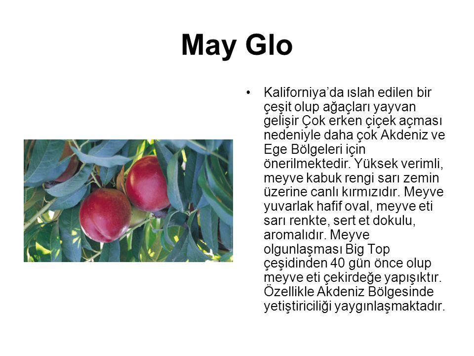 May Glo Kaliforniya'da ıslah edilen bir çeşit olup ağaçları yayvan gelişir Çok erken çiçek açması nedeniyle daha çok Akdeniz ve Ege Bölgeleri için öne