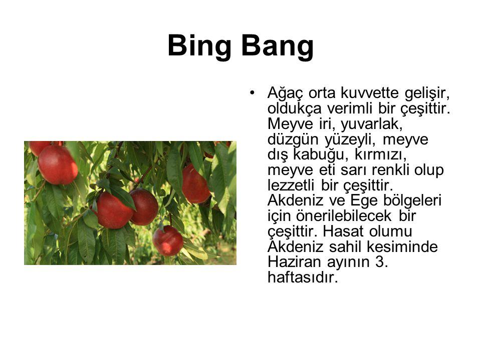 Bing Bang Ağaç orta kuvvette gelişir, oldukça verimli bir çeşittir. Meyve iri, yuvarlak, düzgün yüzeyli, meyve dış kabuğu, kırmızı, meyve eti sarı ren