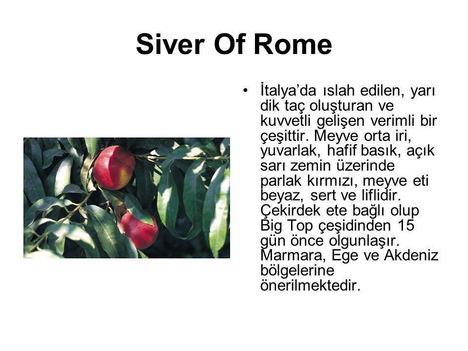 Siver Of Rome İtalya'da ıslah edilen, yarı dik taç oluşturan ve kuvvetli gelişen verimli bir çeşittir. Meyve orta iri, yuvarlak, hafif basık, açık sar