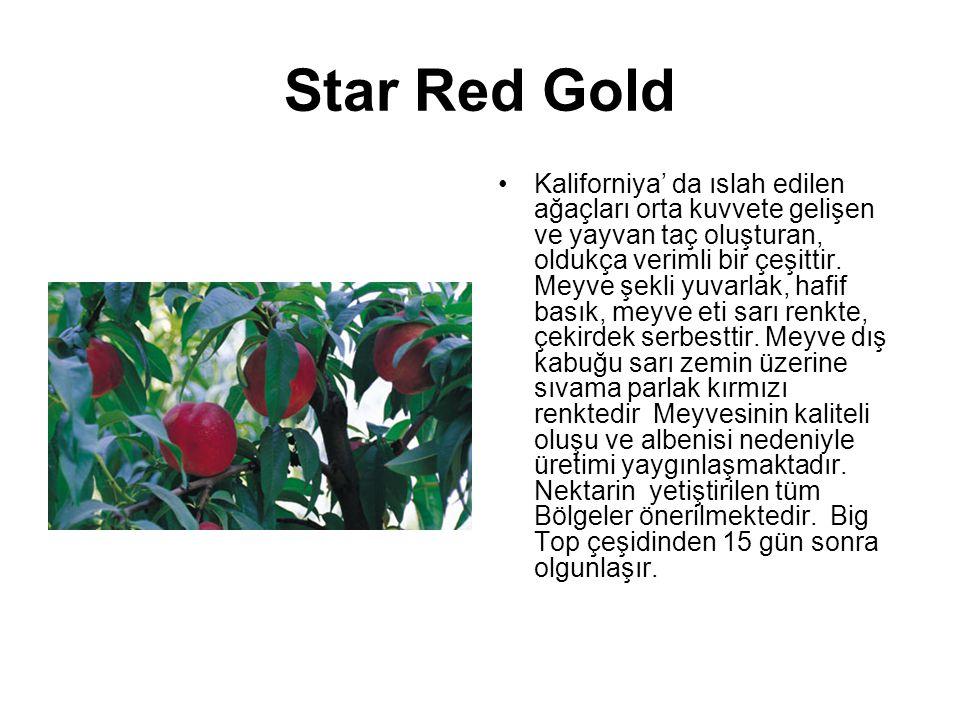 Star Red Gold Kaliforniya' da ıslah edilen ağaçları orta kuvvete gelişen ve yayvan taç oluşturan, oldukça verimli bir çeşittir. Meyve şekli yuvarlak,