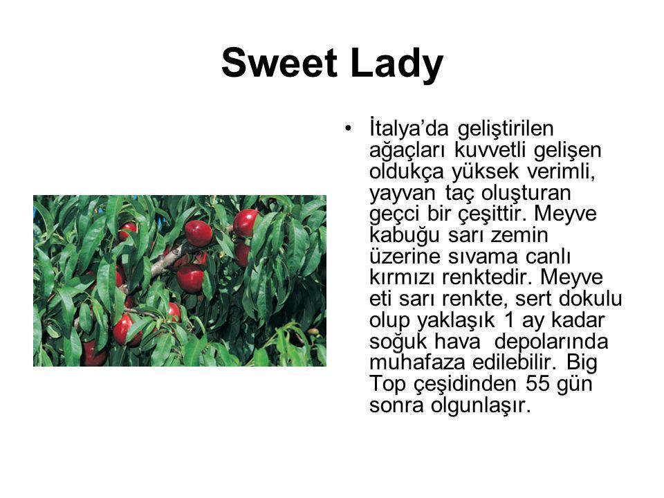 Sweet Lady İtalya'da geliştirilen ağaçları kuvvetli gelişen oldukça yüksek verimli, yayvan taç oluşturan geçci bir çeşittir. Meyve kabuğu sarı zemin ü