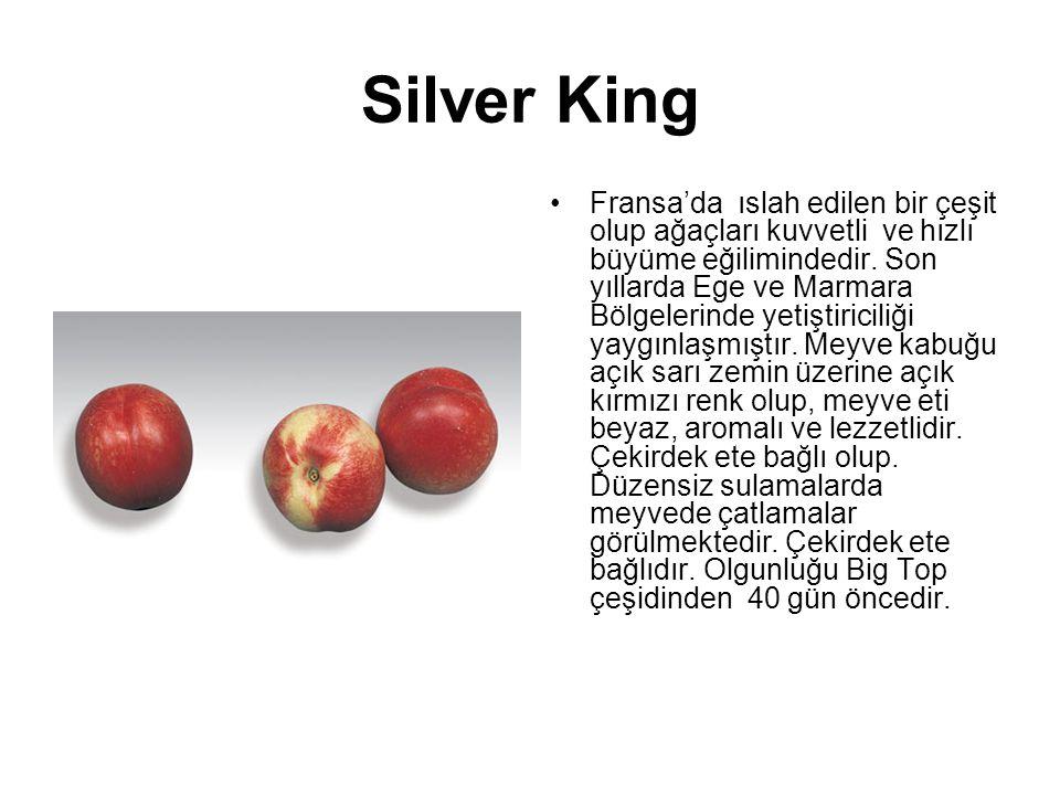 Silver King Fransa'da ıslah edilen bir çeşit olup ağaçları kuvvetli ve hızlı büyüme eğilimindedir. Son yıllarda Ege ve Marmara Bölgelerinde yetiştiric