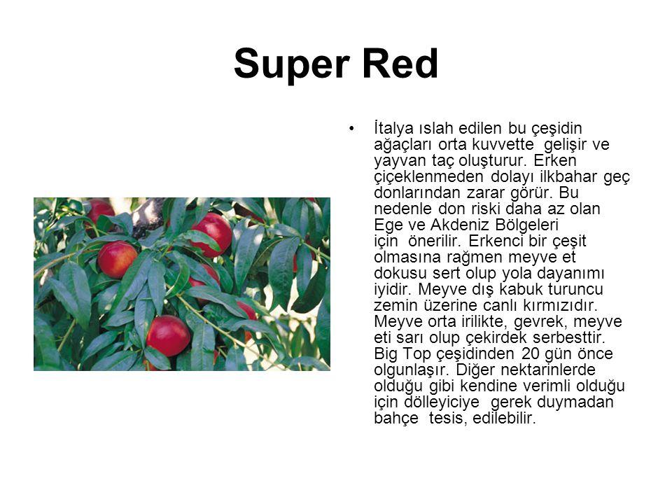 Super Red İtalya ıslah edilen bu çeşidin ağaçları orta kuvvette gelişir ve yayvan taç oluşturur. Erken çiçeklenmeden dolayı ilkbahar geç donlarından z