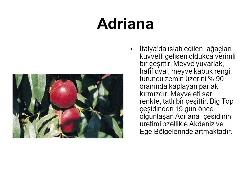 Adriana İtalya'da ıslah edilen, ağaçları kuvvetli gelişen oldukça verimli bir çeşittir. Meyve yuvarlak, hafif oval, meyve kabuk rengi; turuncu zemin ü