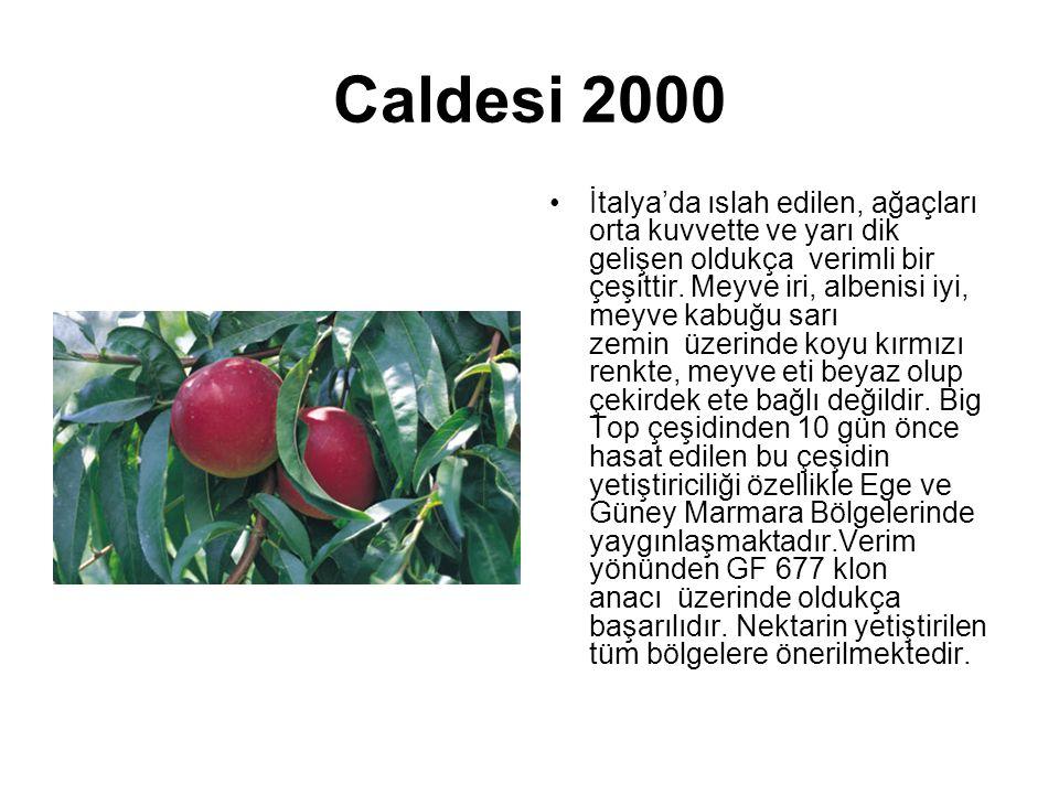 Caldesi 2000 İtalya'da ıslah edilen, ağaçları orta kuvvette ve yarı dik gelişen oldukça verimli bir çeşittir. Meyve iri, albenisi iyi, meyve kabuğu sa