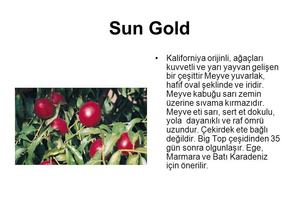 Sun Gold Kaliforniya orijinli, ağaçları kuvvetli ve yarı yayvan gelişen bir çeşittir Meyve yuvarlak, hafif oval şeklinde ve iridir. Meyve kabuğu sarı