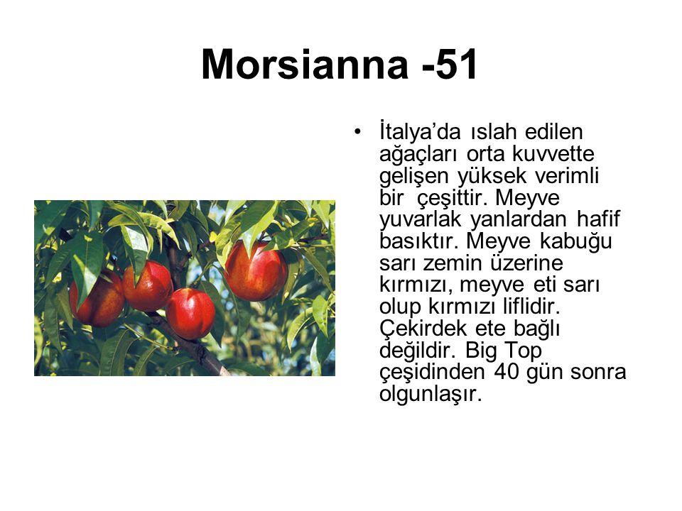 Morsianna -51 İtalya'da ıslah edilen ağaçları orta kuvvette gelişen yüksek verimli bir çeşittir. Meyve yuvarlak yanlardan hafif basıktır. Meyve kabuğu