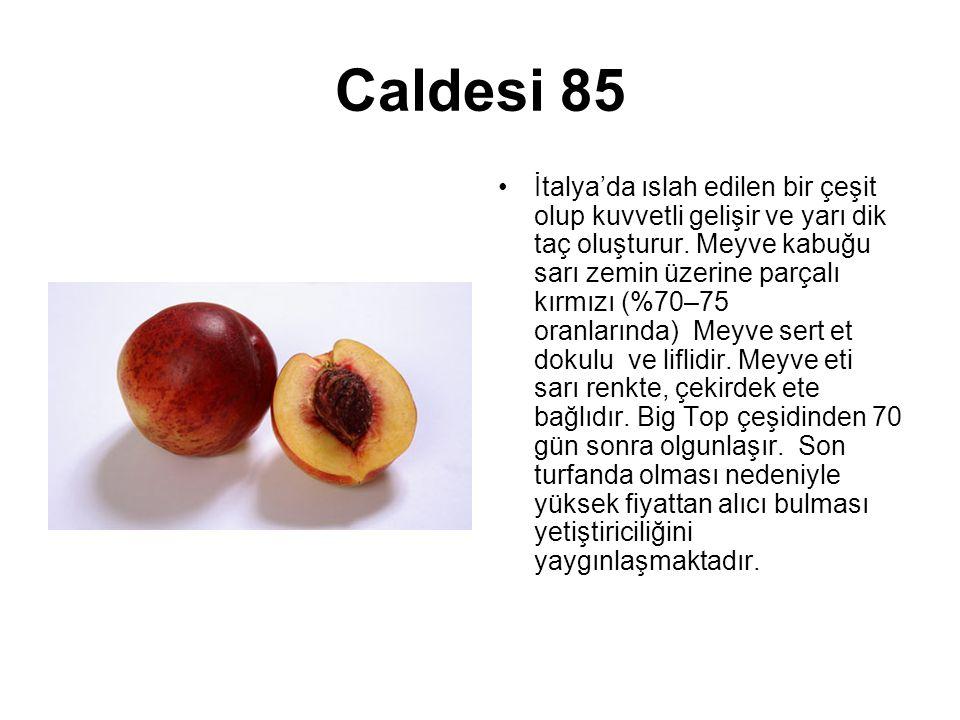 Caldesi 85 İtalya'da ıslah edilen bir çeşit olup kuvvetli gelişir ve yarı dik taç oluşturur. Meyve kabuğu sarı zemin üzerine parçalı kırmızı (%70–75 o