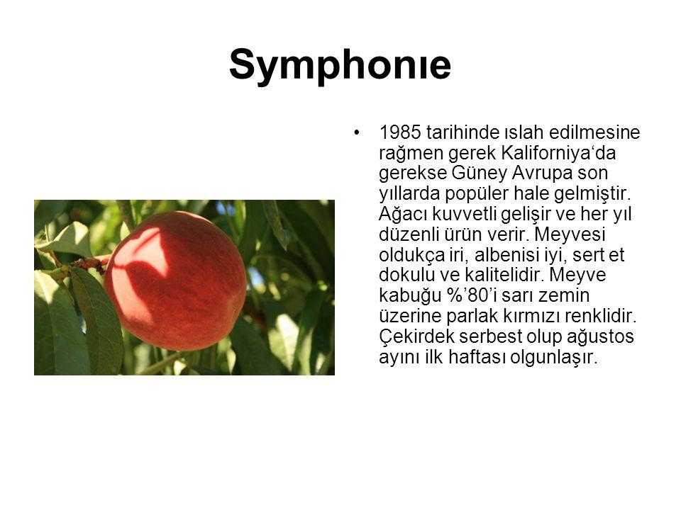 Symphonıe 1985 tarihinde ıslah edilmesine rağmen gerek Kaliforniya'da gerekse Güney Avrupa son yıllarda popüler hale gelmiştir. Ağacı kuvvetli gelişir