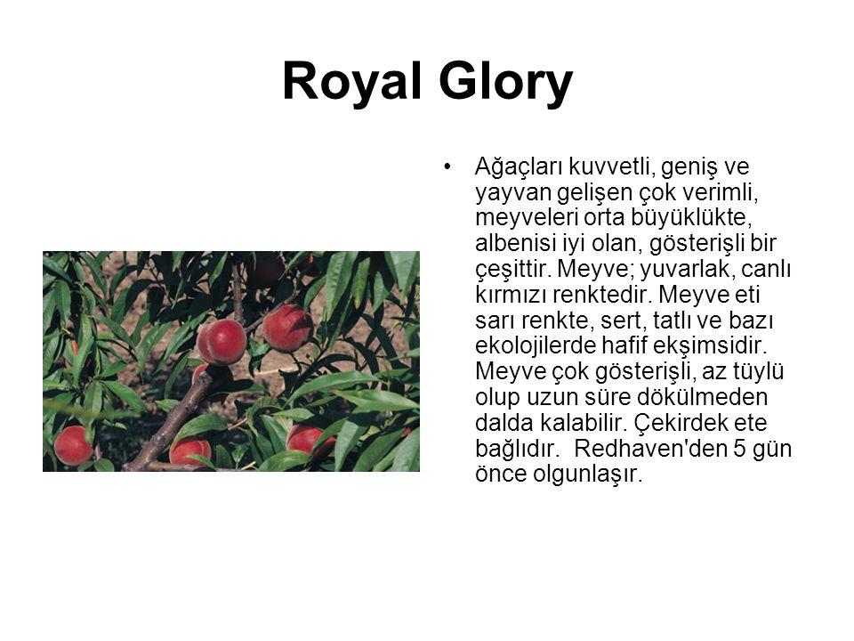 Royal Glory Ağaçları kuvvetli, geniş ve yayvan gelişen çok verimli, meyveleri orta büyüklükte, albenisi iyi olan, gösterişli bir çeşittir. Meyve; yuva
