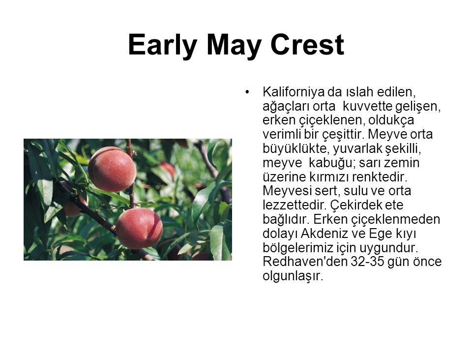 Early May Crest Kaliforniya da ıslah edilen, ağaçları orta kuvvette gelişen, erken çiçeklenen, oldukça verimli bir çeşittir. Meyve orta büyüklükte, yu
