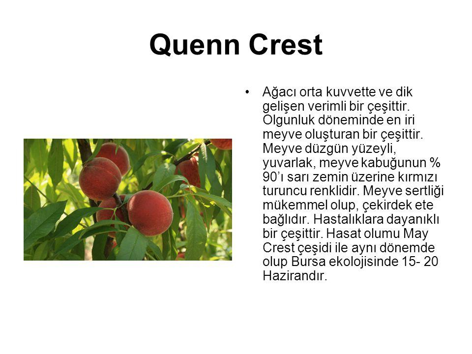 Quenn Crest Ağacı orta kuvvette ve dik gelişen verimli bir çeşittir. Olgunluk döneminde en iri meyve oluşturan bir çeşittir. Meyve düzgün yüzeyli, yuv