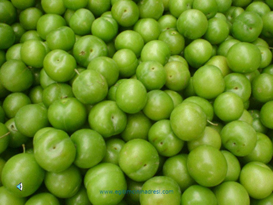 Yeşil www.egitimcininadresi.com