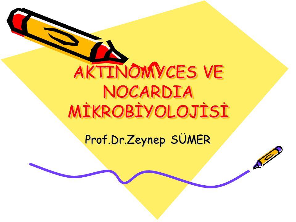 AKTINOMYCES VE NOCARDIA MİKROBİYOLOJİSİ Prof.Dr.Zeynep SÜMER