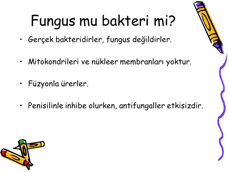 Fungus mu bakteri mi.Gerçek bakteridirler, fungus değildirler.
