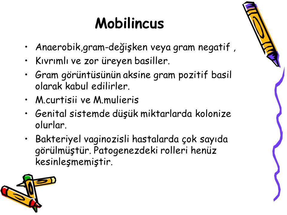 Mobilincus Anaerobik,gram-değişken veya gram negatif, Kıvrımlı ve zor üreyen basiller.