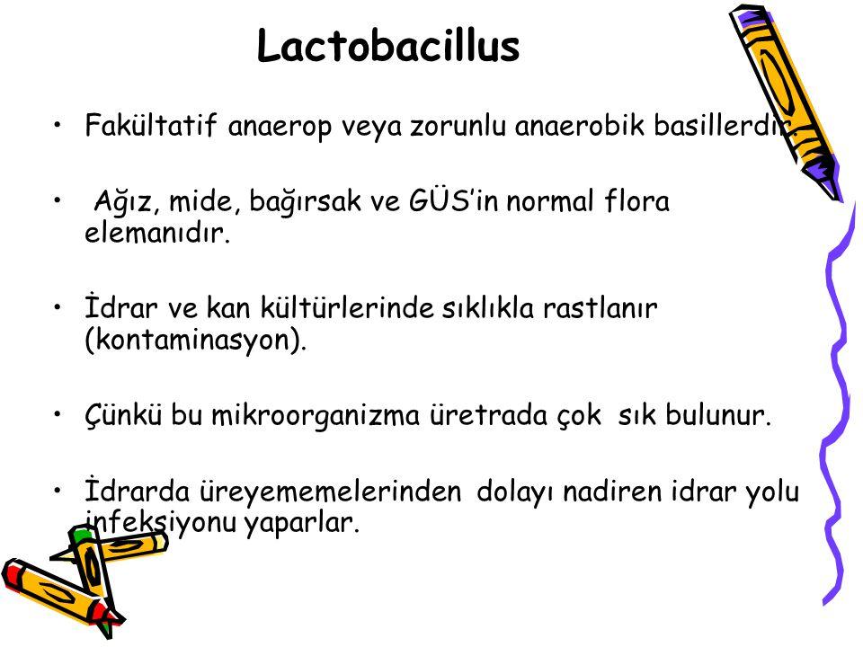 Lactobacillus Fakültatif anaerop veya zorunlu anaerobik basillerdir.