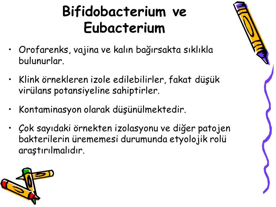 Bifidobacterium ve Eubacterium Orofarenks, vajina ve kalın bağırsakta sıklıkla bulunurlar.