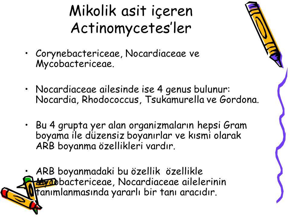 Mikolik asit içeren Actinomycetes'ler Corynebactericeae, Nocardiaceae ve Mycobactericeae.