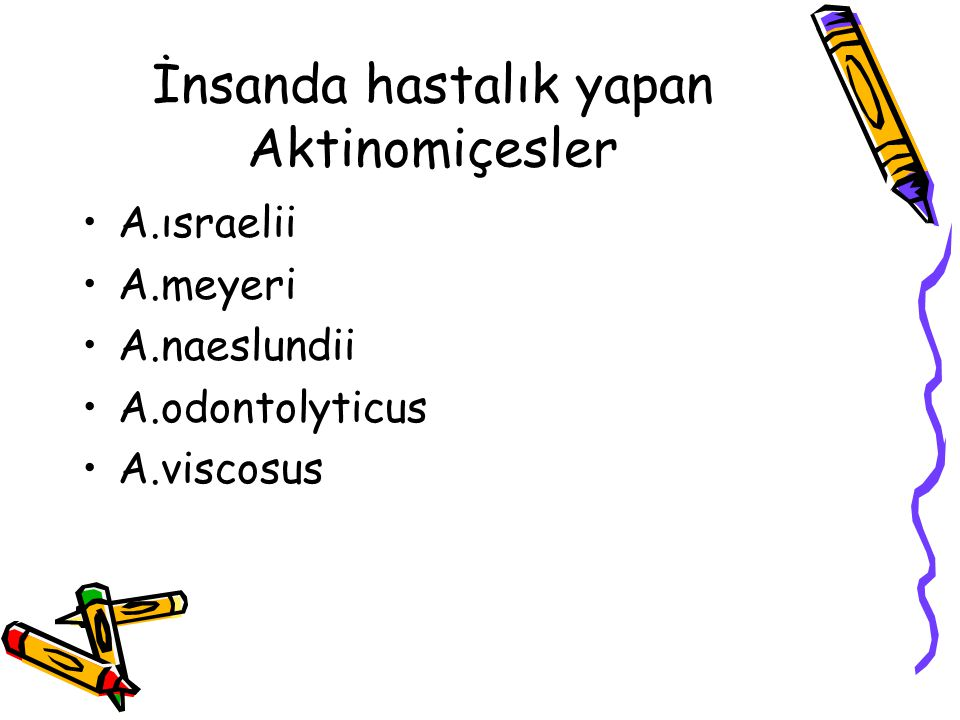 İnsanda hastalık yapan Aktinomiçesler A.ısraelii A.meyeri A.naeslundii A.odontolyticus A.viscosus