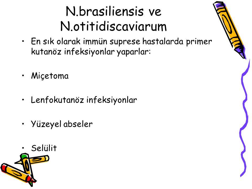 N.brasiliensis ve N.otitidiscaviarum En sık olarak immün suprese hastalarda primer kutanöz infeksiyonlar yaparlar: Miçetoma Lenfokutanöz infeksiyonlar Yüzeyel abseler Selülit