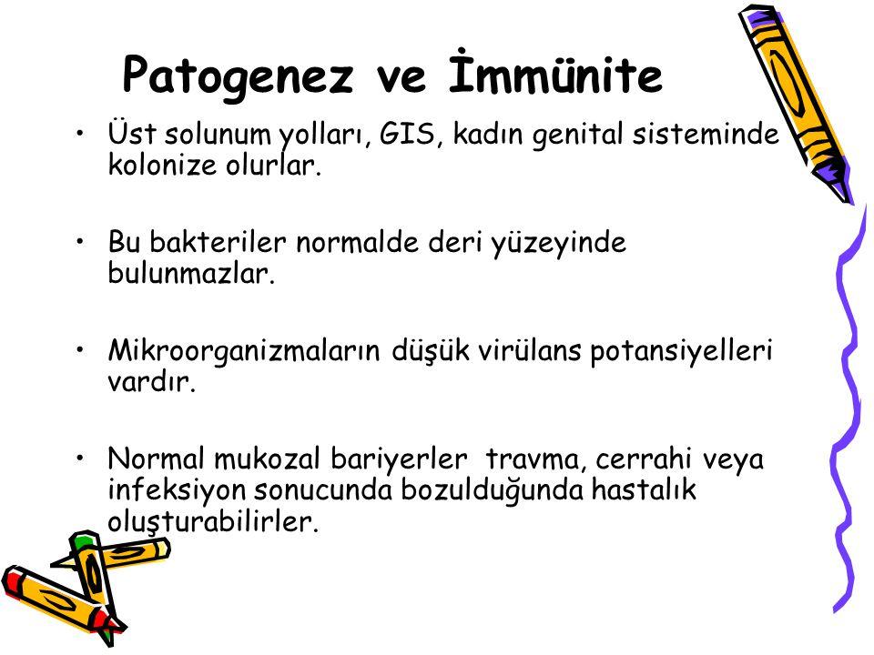 Aktinomikozis Kronik granulamatöz lezyonlar Bunlar daha sonra süpüratif hale geçerler.