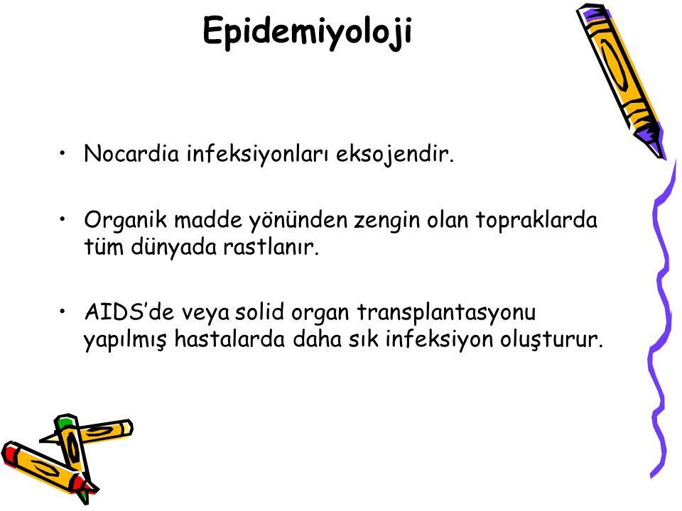 Epidemiyoloji Nocardia infeksiyonları eksojendir.