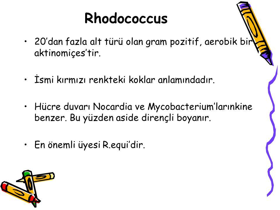 Rhodococcus 20'dan fazla alt türü olan gram pozitif, aerobik bir aktinomiçes'tir.