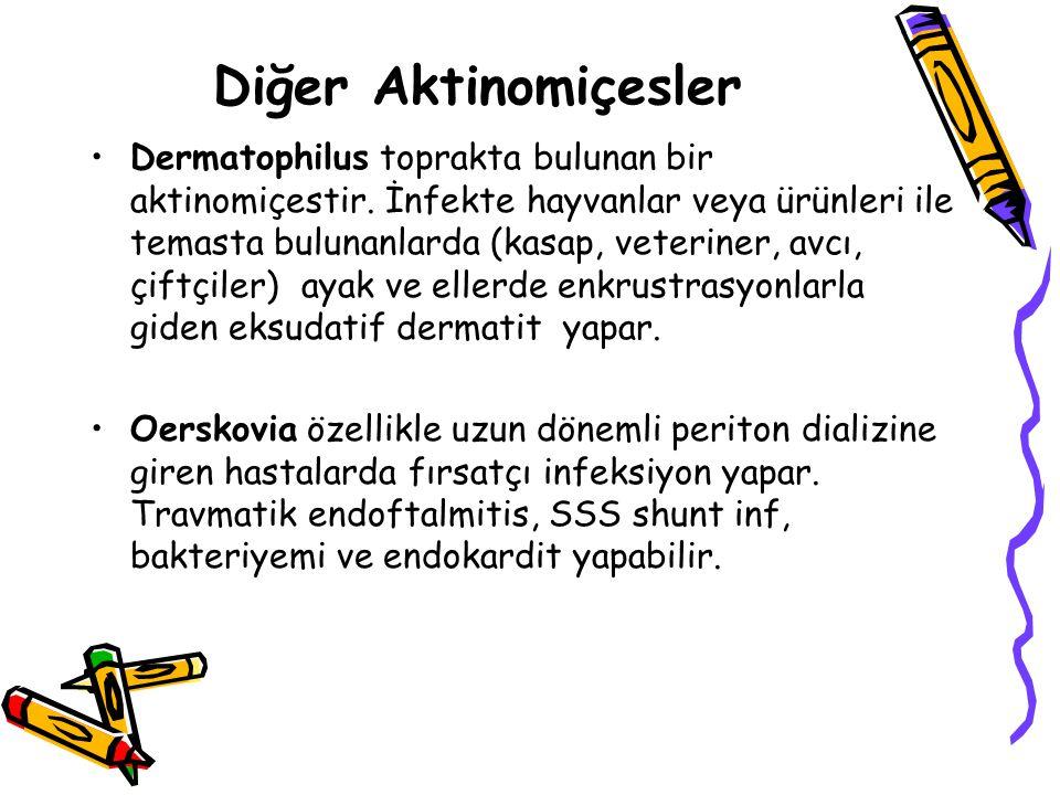 Diğer Aktinomiçesler Dermatophilus toprakta bulunan bir aktinomiçestir.
