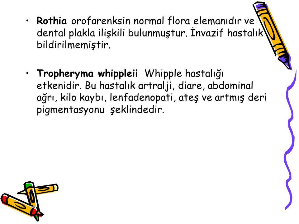 Rothia orofarenksin normal flora elemanıdır ve dental plakla ilişkili bulunmuştur.