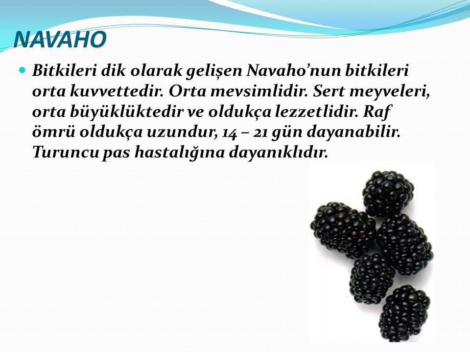 NAVAHO Bitkileri dik olarak gelişen Navaho'nun bitkileri orta kuvvettedir. Orta mevsimlidir. Sert meyveleri, orta büyüklüktedir ve oldukça lezzetlidir