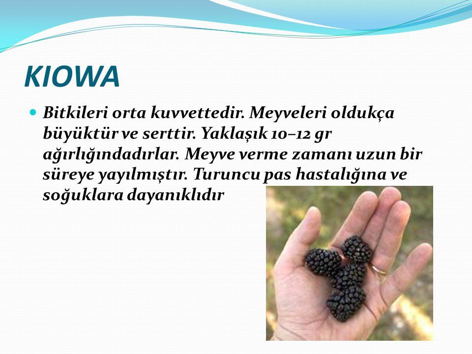 KIOWA Bitkileri orta kuvvettedir. Meyveleri oldukça büyüktür ve serttir. Yaklaşık 10–12 gr ağırlığındadırlar. Meyve verme zamanı uzun bir süreye yayıl