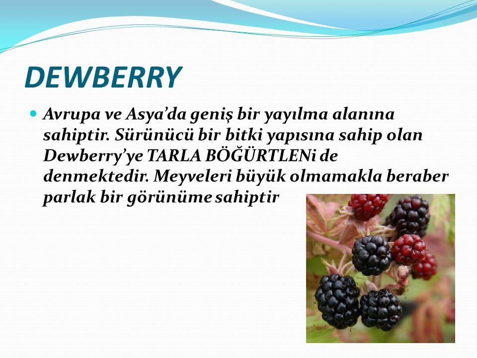 DEWBERRY Avrupa ve Asya'da geniş bir yayılma alanına sahiptir. Sürünücü bir bitki yapısına sahip olan Dewberry'ye TARLA BÖĞÜRTLENi de denmektedir. Mey